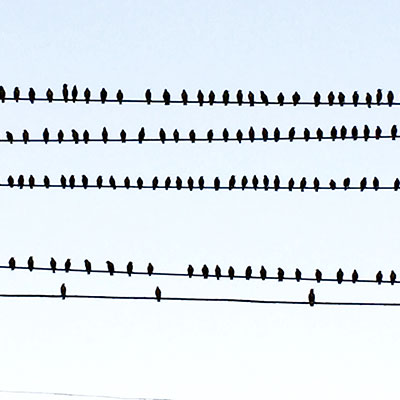 birds-on-wire